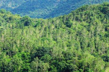 """Картина, постер, плакат, фотообои """"вид на лес """", артикул 13612608"""