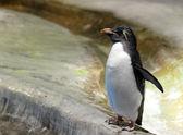 Photo Penguin