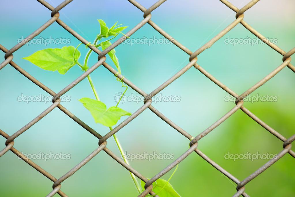 Maschendrahtzaun mit frischen Pflanze — Stockfoto © leungchopan ...