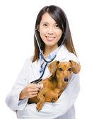 Photo Veterinarian and dachshund dog