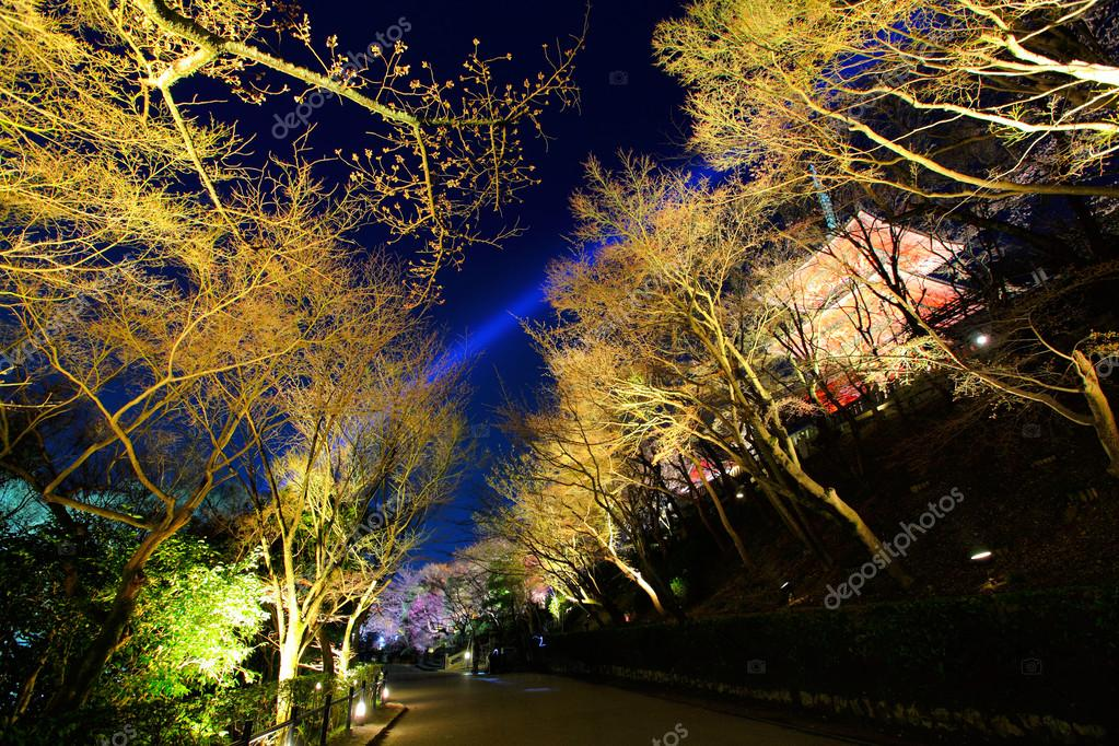 Japanese temple and sakura tree at night