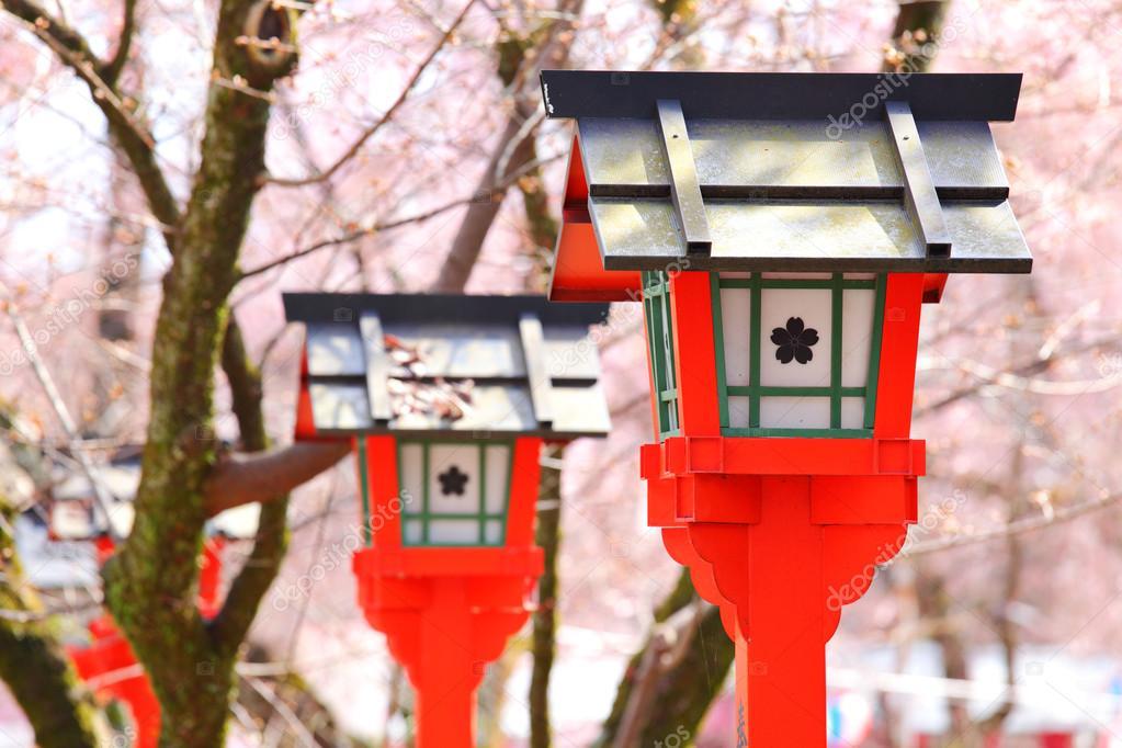 Red lantern with sakura tree in japanese temple
