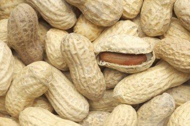ripe peanuts background