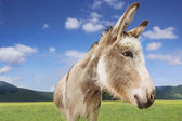 Photo Donkey in green field