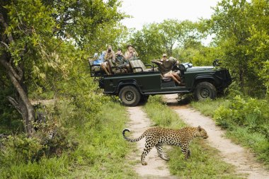 Tourists looking at cheetah