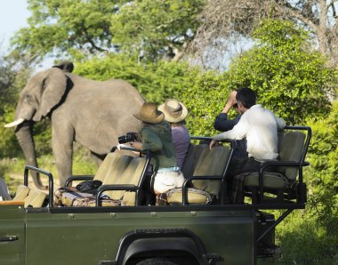 Tourists on safari watching elephant