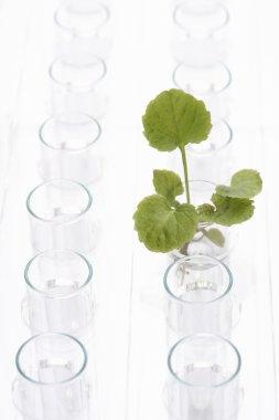 seedling in glass beaker