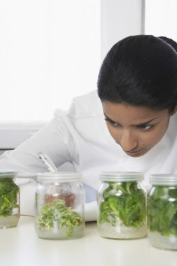 Lab Worker Studying Jars of Herbs