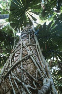 Green palms in rainforest