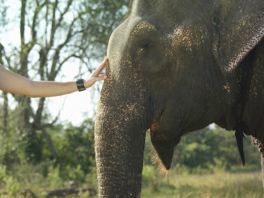 woman touching elephant