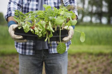 Man holding seedlings