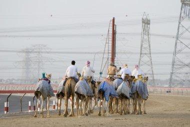 Camels and jockeys training