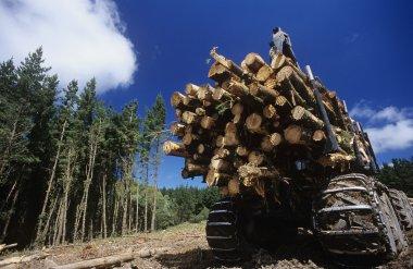 deforestation for woodchipping on Plantation