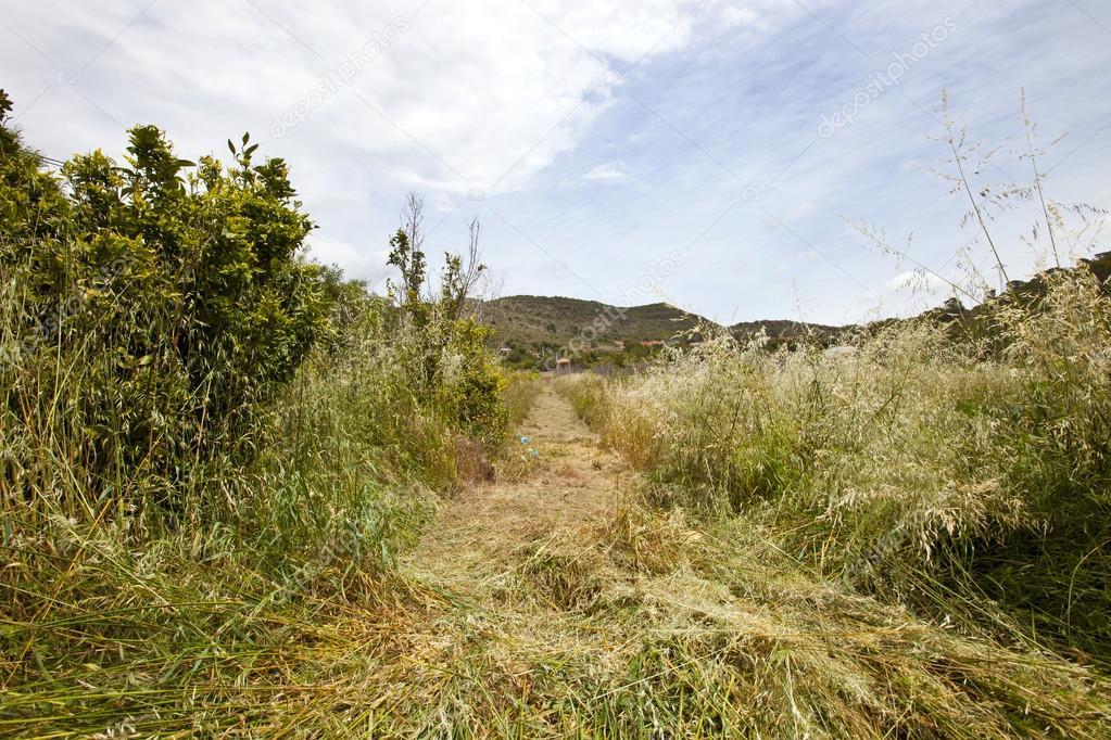 Path mown through long grass