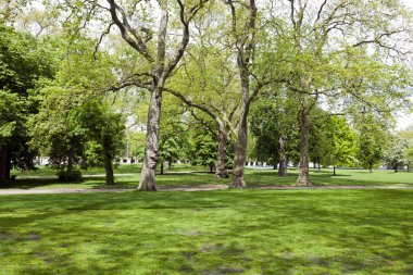 View across shady grass into park