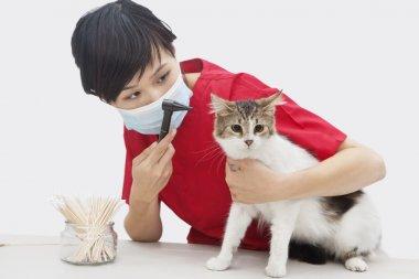 Female veterinarian examining cat's ear