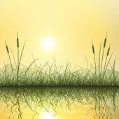 Fotografia erba e le canne