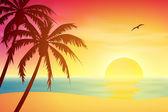 tropické slunce