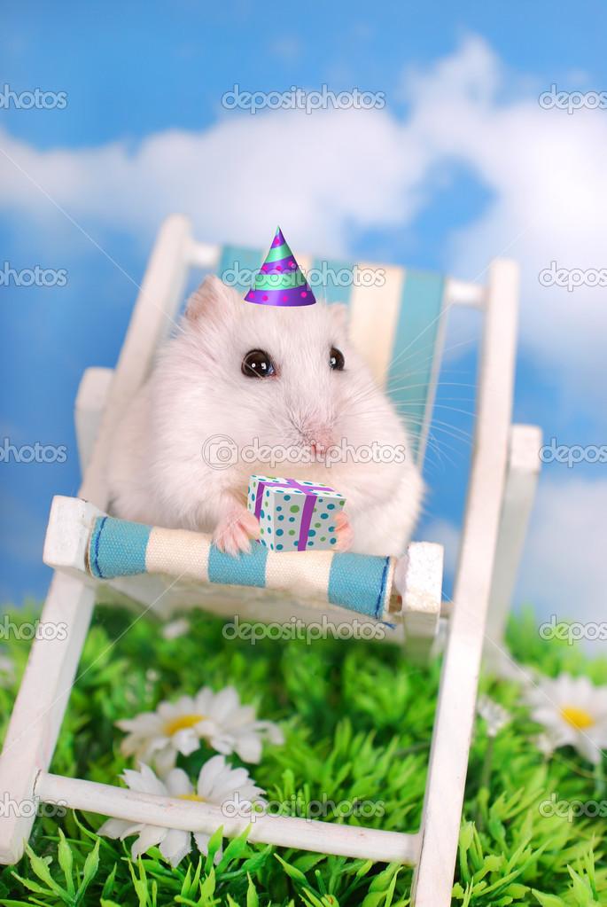 Witte Hamster Vieren Verjaardag Stockfoto C Teresaterra 23785467