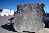 Kauri-Baum. Whakarewarewa Geothermie-Reservat. Neuseeland.