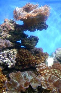 Underwater Aquaium