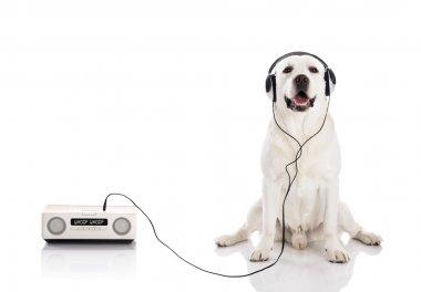 Labrador listen music