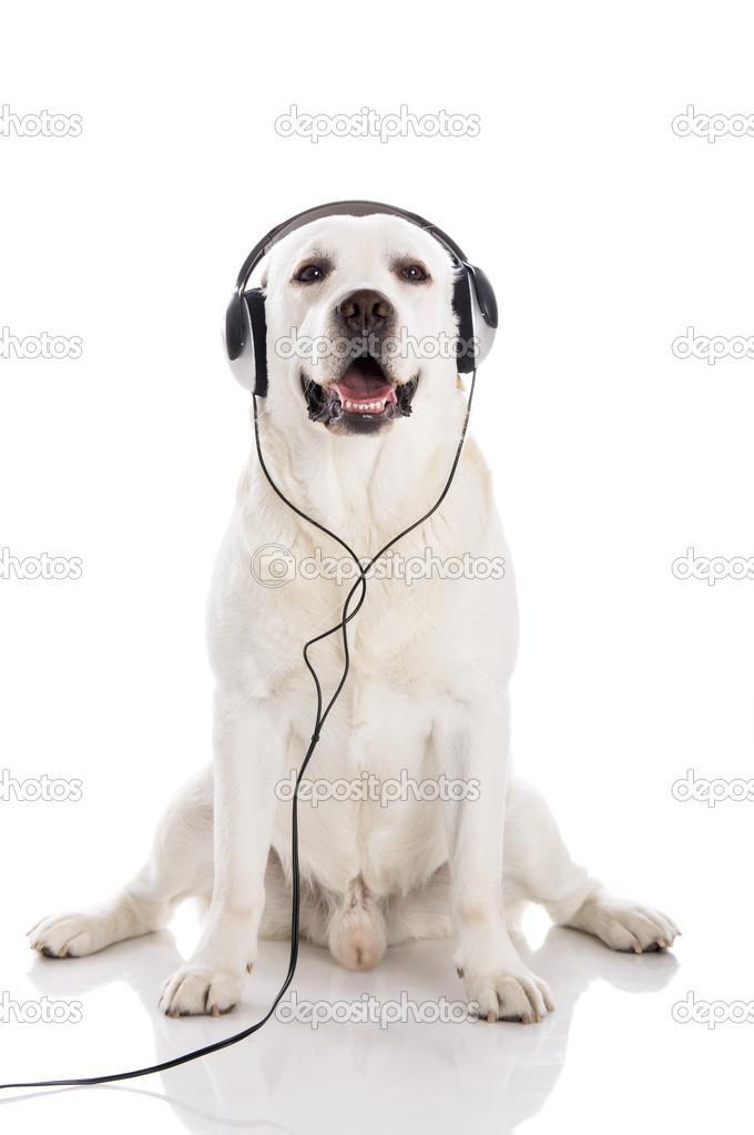 musica alambrador