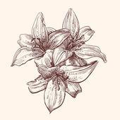 lily illusztráció