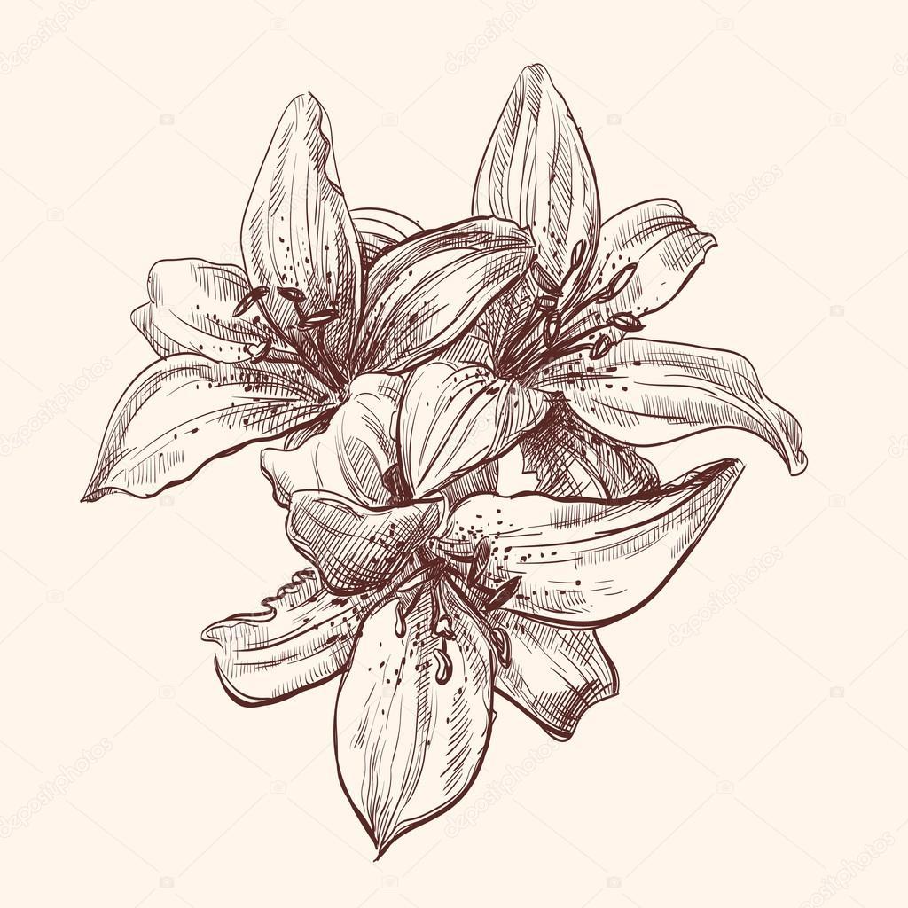 Illustration lily
