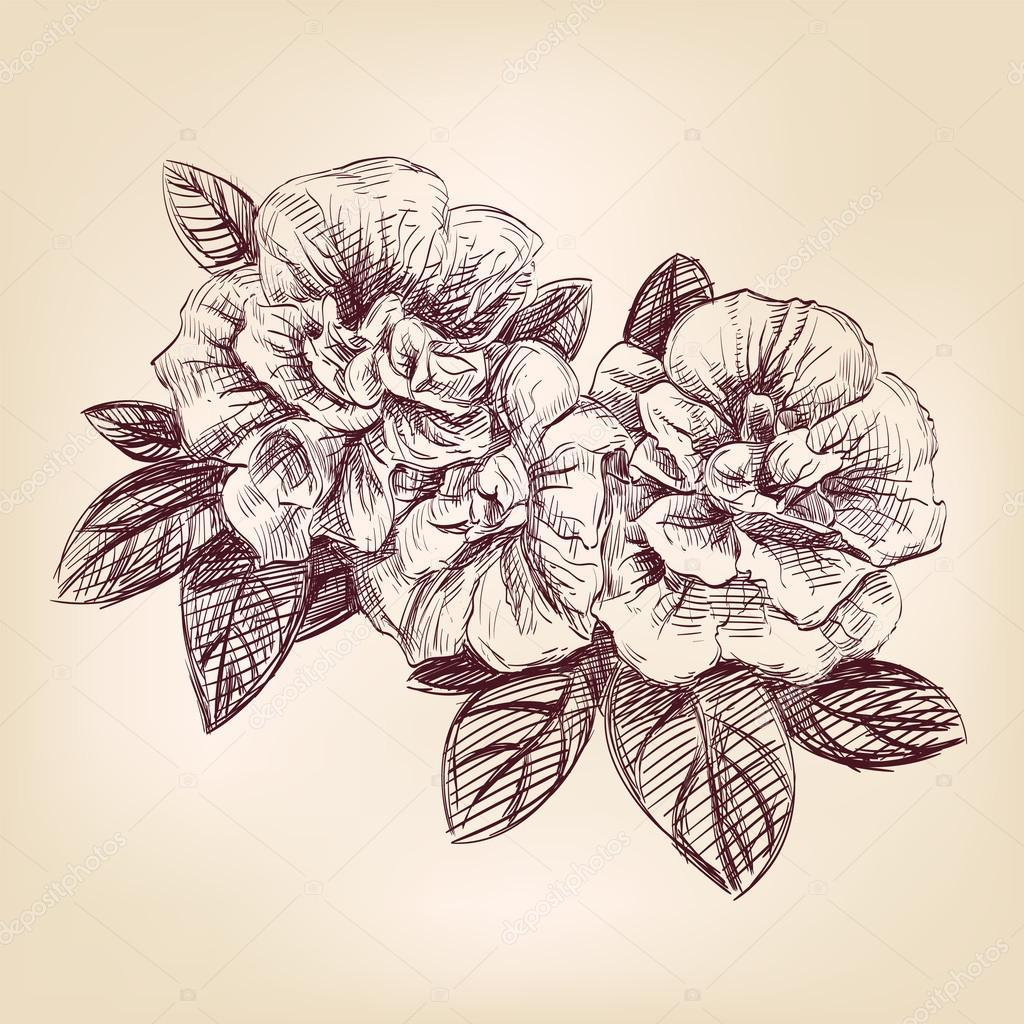 Hand drawn violets flowers