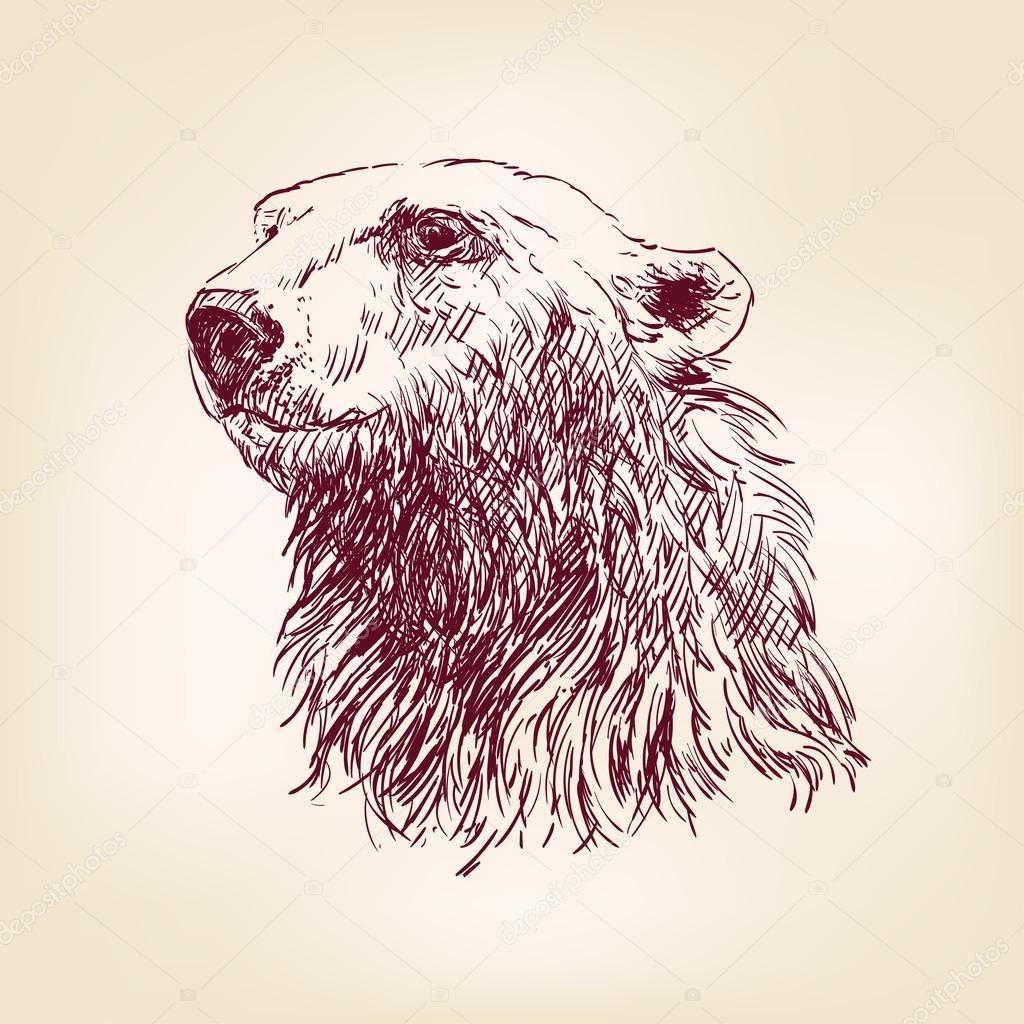 Polar bear hand drawn