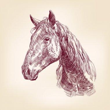 Horse vector llustration