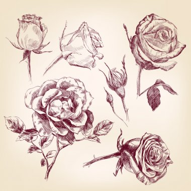 Hand drawn roses set