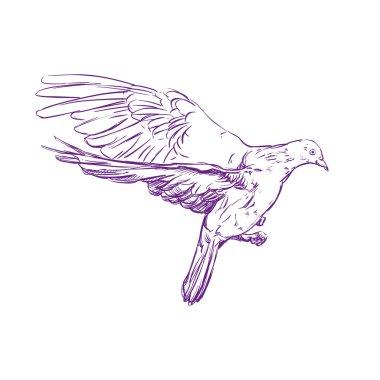 Flying dove vector llustration realistic sketch