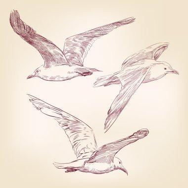Seagulls set hand drawn vector llustration