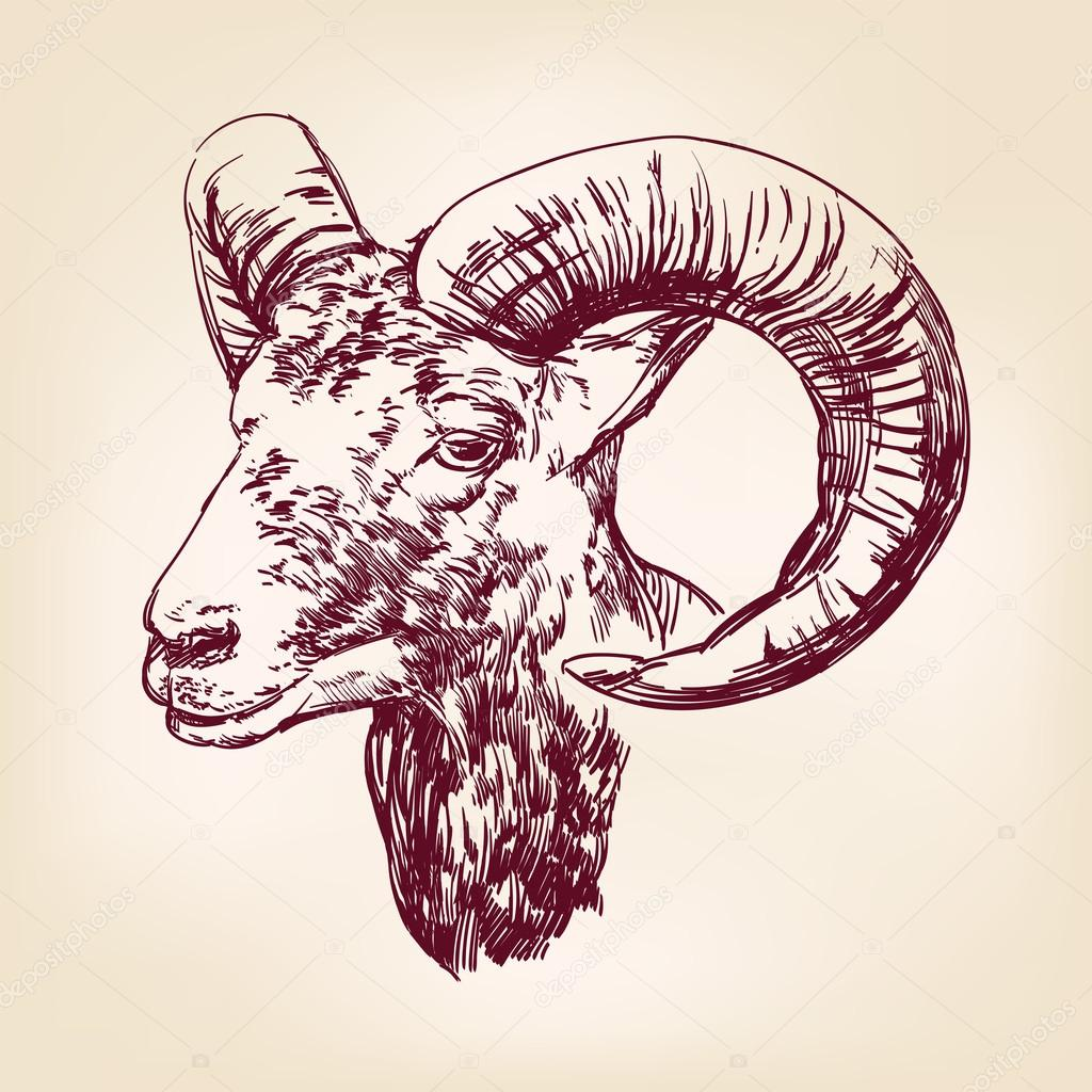 Goat Hand Drawn Vector Llustration Realistic Sketch Stock