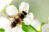 Photo bee collects flower nectar