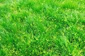 zöld fű háttér