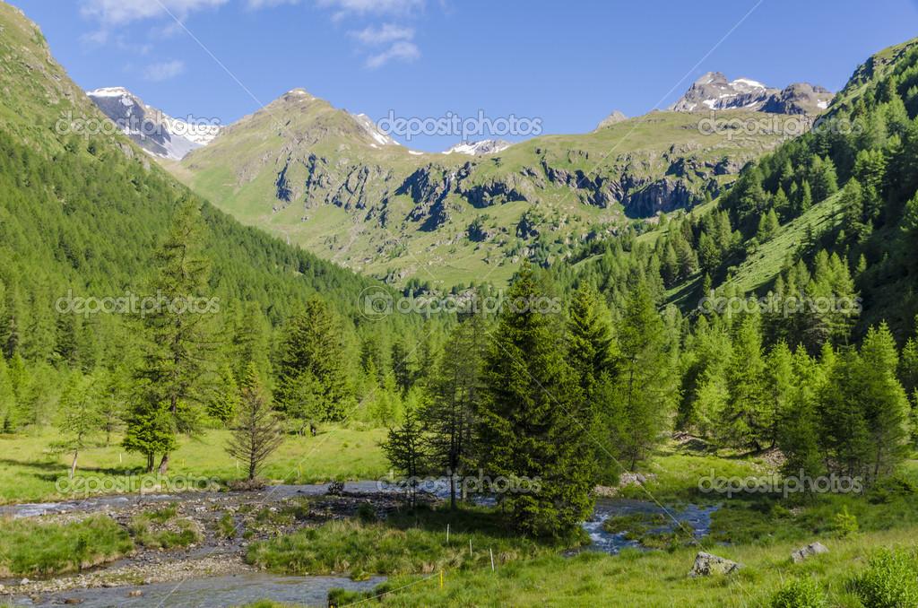 Ruscello di montagna che scorre tra i campi alpini ...