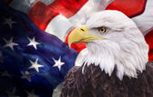 Fotografia aquila calva con la bandiera americana
