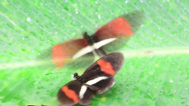 dva motýli