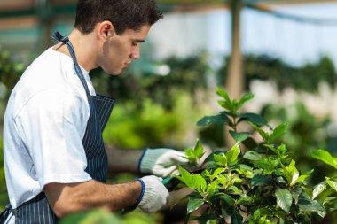 Male gardener working in garden stock vector