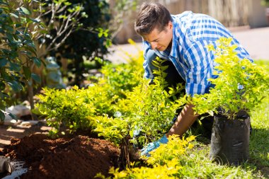 Man transplanting a plant