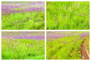 Spring Backgrounds Collage