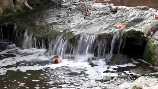 vatten, stenar och löv
