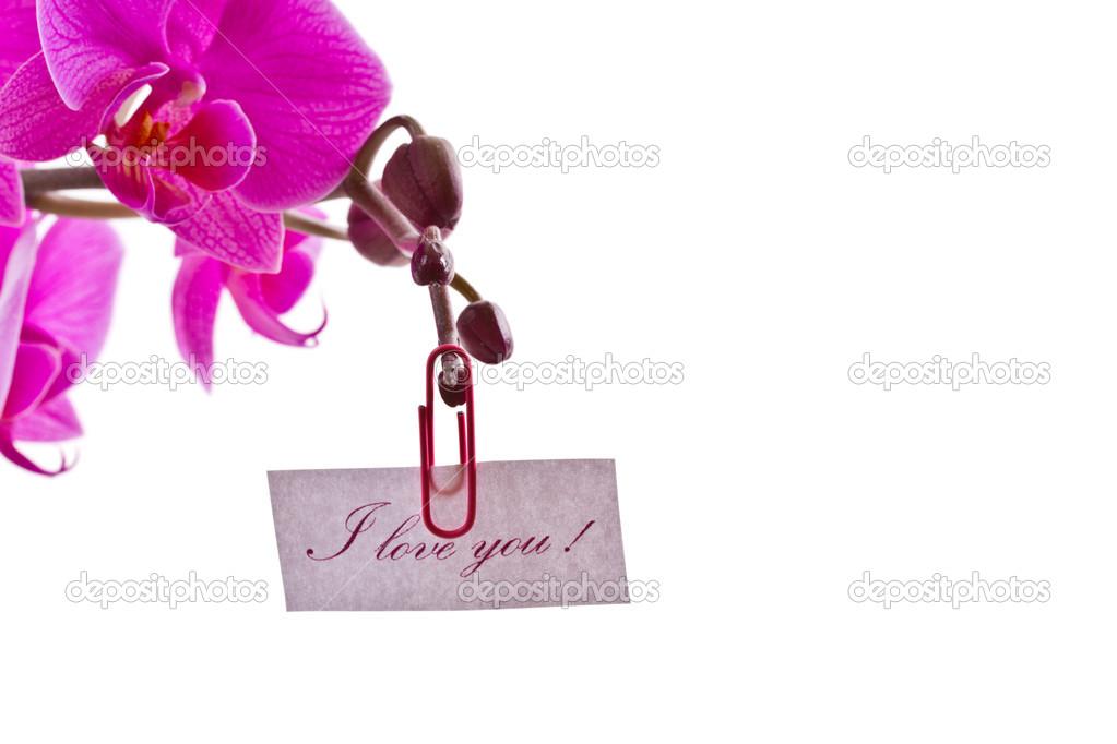 так мэрия орхидеи с признанием в любви фото цветками насыщенно-розового цвета