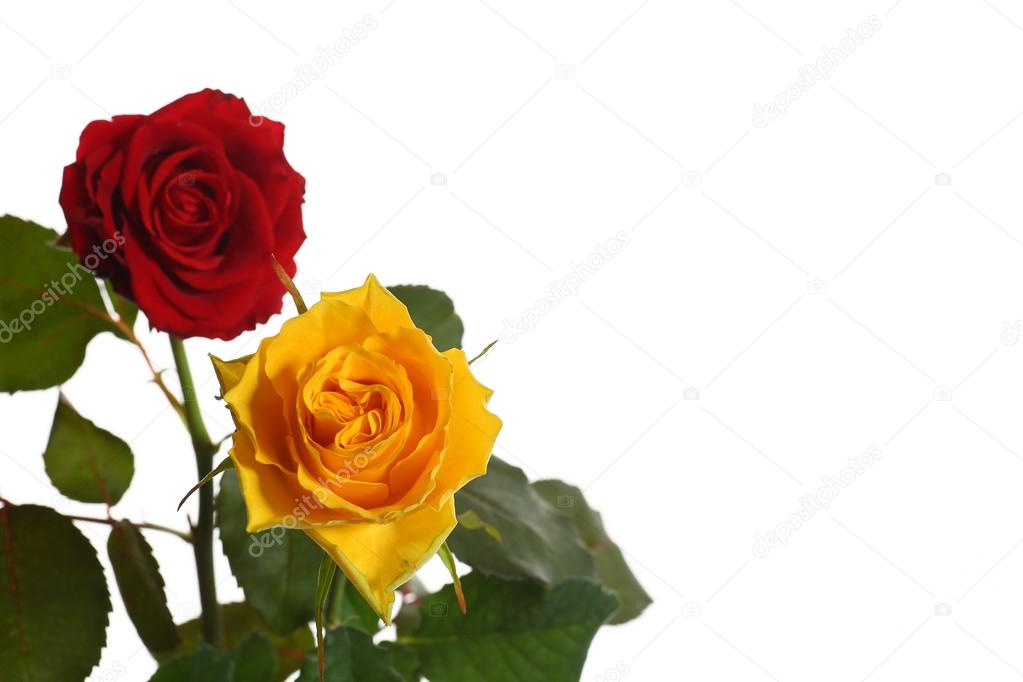 Rosas Amarelas E Vermelhas Stock Photo Rawlik 33220269