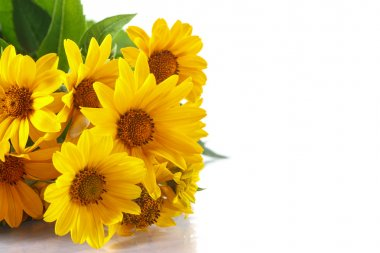bunch of yellow daisy flowers