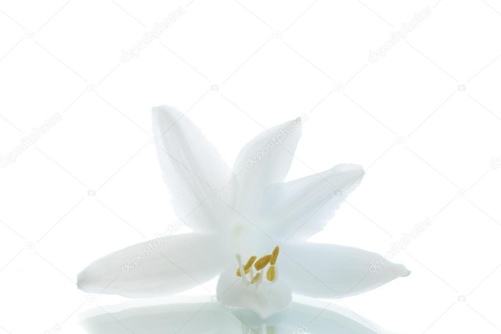 schöne Blume hosta — Stockfoto © Rawlik #50982201