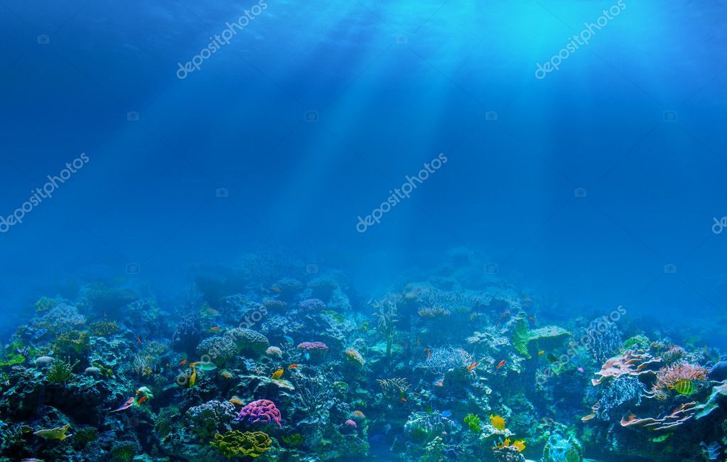 Фотообои Underwater coral reef background